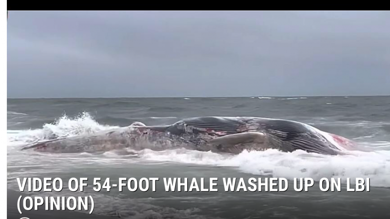 Beached whale on Jersey shore