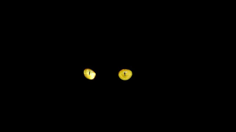 Two cats eyes in the darkness